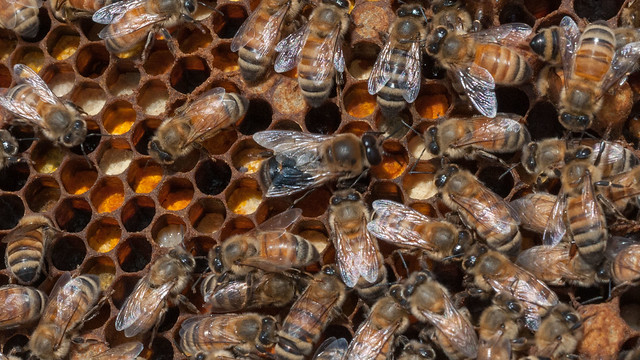 A close-up of bees