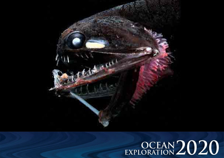 Ocean exploration 2020 deep sea fish did you know that for Ocean explorer fishing