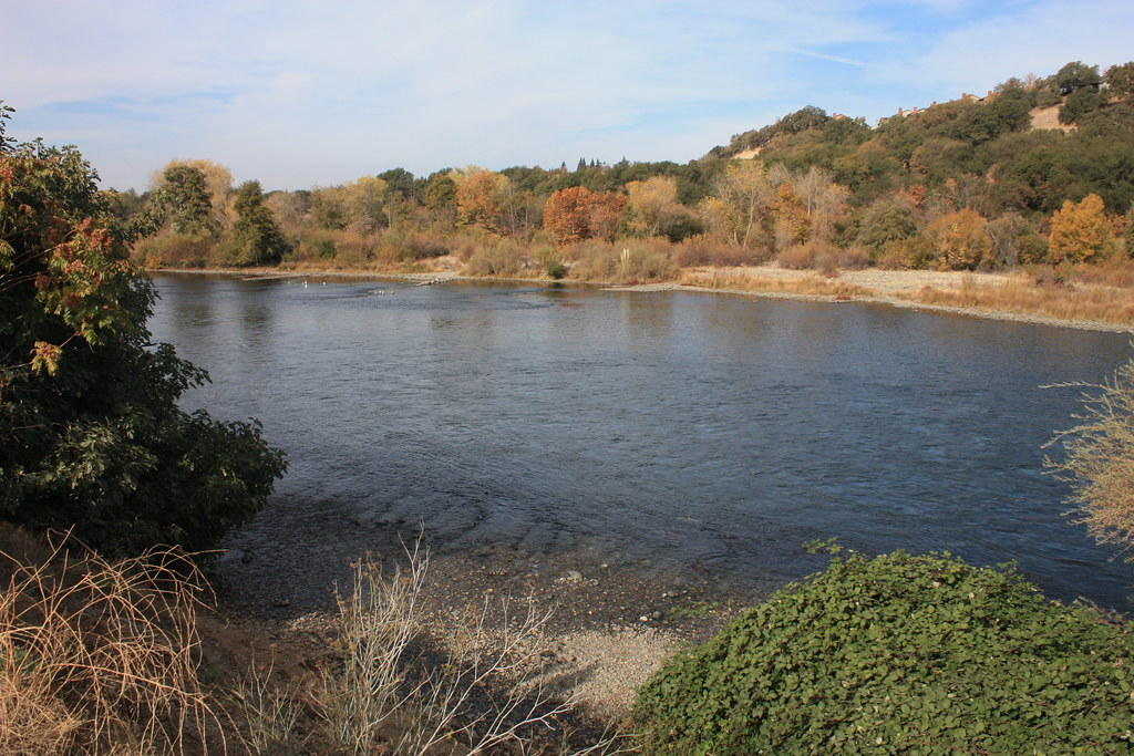 American River Nimbus Fish Hatchery Visited The Nimbus