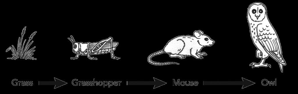 Simple food chain illustration used in gr 4 6 natural for Food web coloring pages