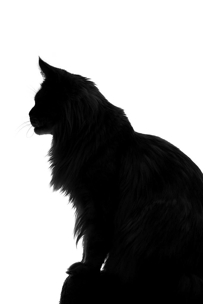White Cat Sillhouette