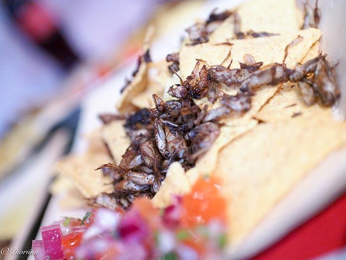 hyönteisruokaa