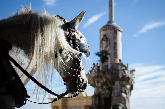 A horse rests outside of the Mosque-Cathedral of Córdoba.