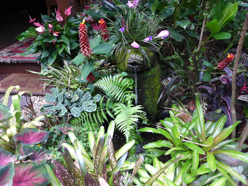 Array Of Tropical Plants Around A Water Feature Tropical G Flickr