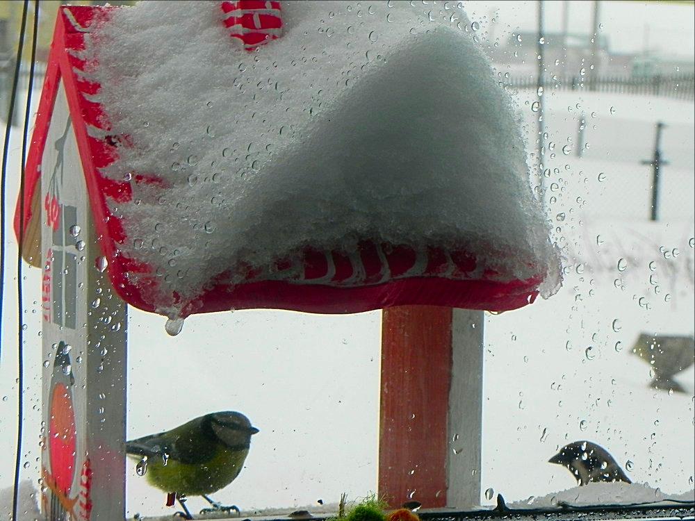 птички 9