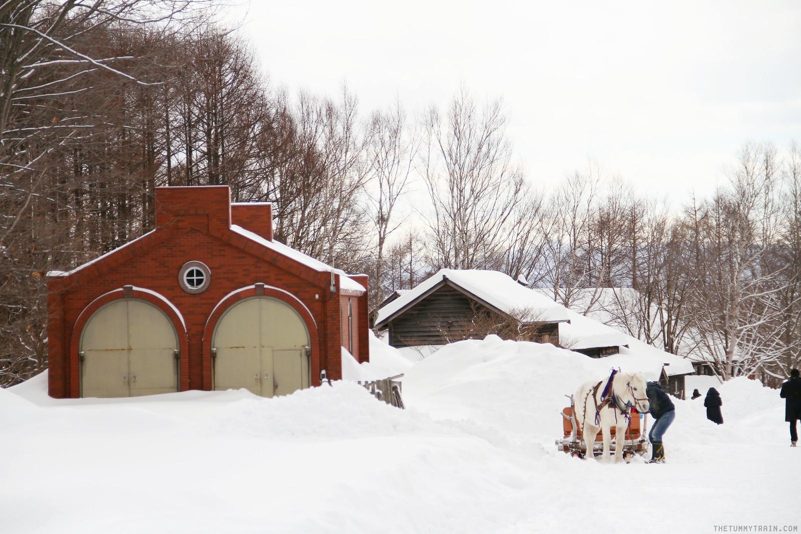 32874850136 0d197596da h - Sapporo Snow And Smile: 8 Unforgettable Winter Experiences in Sapporo City