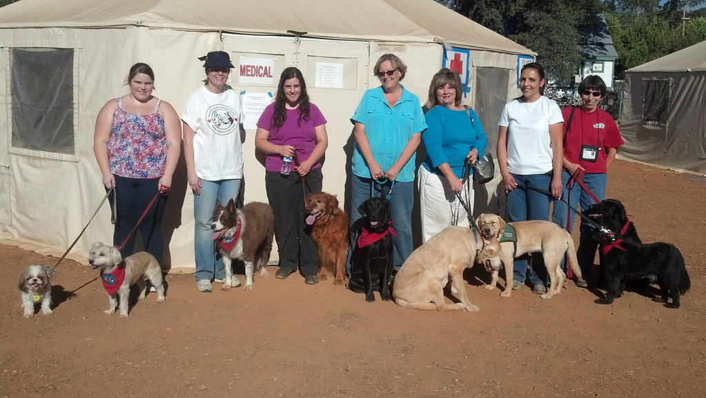 Trained Therapy Dogs For Sale