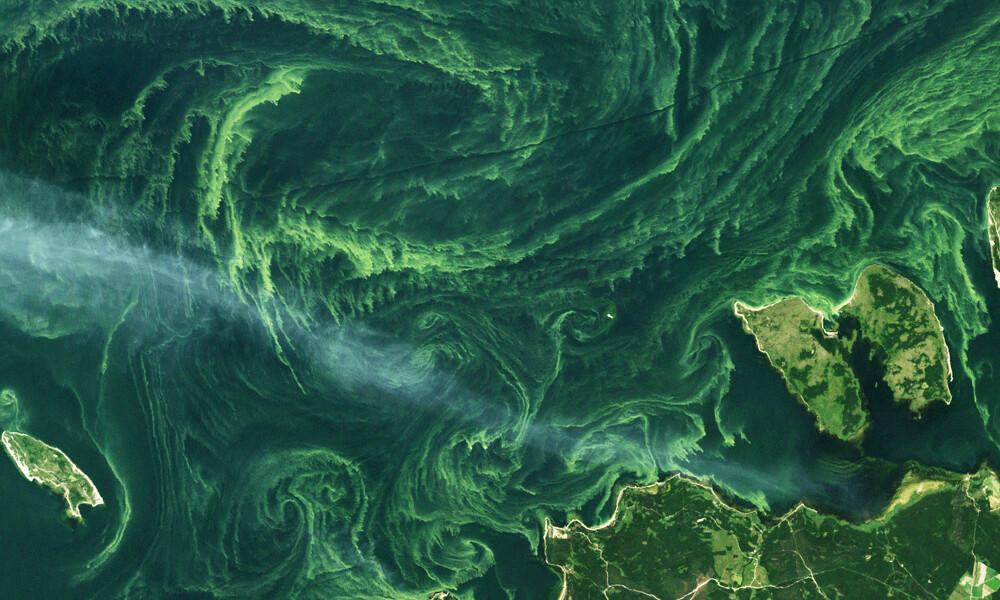 Algae Bloom Algae Bloom Off The Coast Of Estonia On July