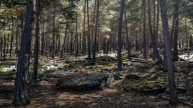 Siguiendo las marcas amarillas en el bosque