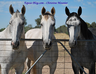 Accessing Equine Grants - Finding Funds Online for Your Horse Endeavour