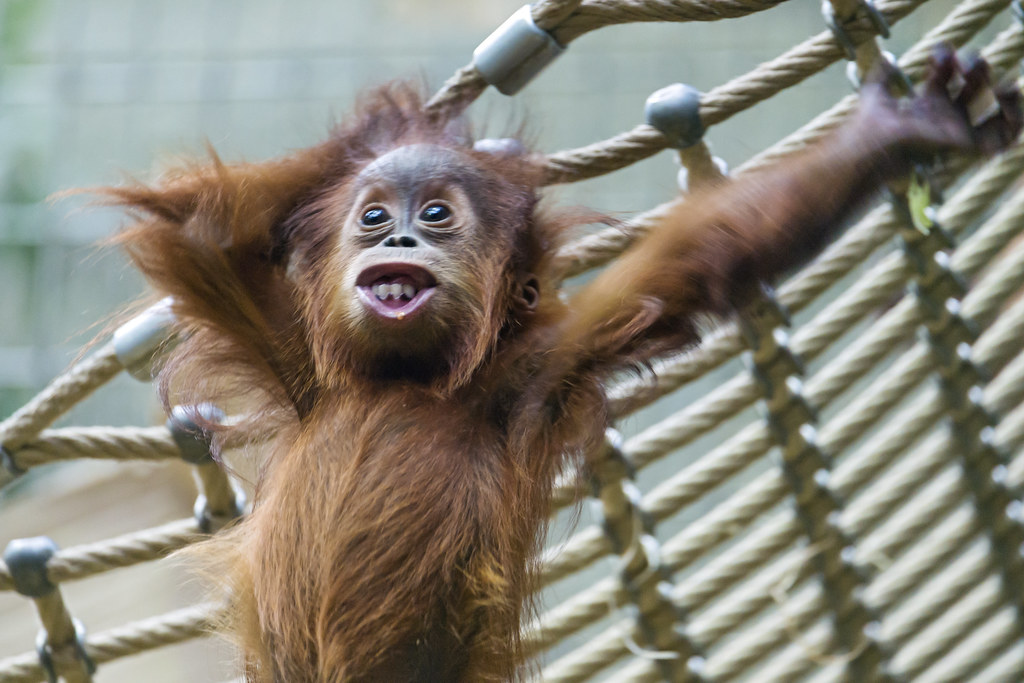 Image Result For Cute Baby Monkey
