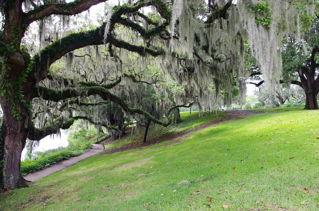 Photo Favorite: Spanish Moss on trees at Middleton Place plantation, Dorchester County, South Carolina, 15 miles from Charleston, June 11, 2012 (Pentax K-r)