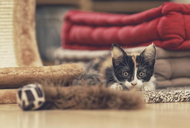 chaton qui urine tous les matins sur le lit que faire forum sur les chats. Black Bedroom Furniture Sets. Home Design Ideas