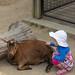 Poke a Goat