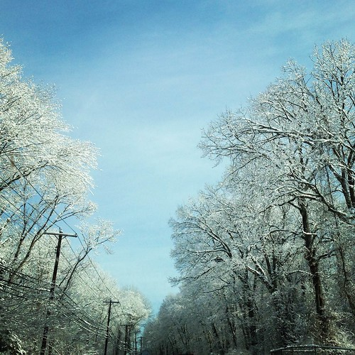 icetrees