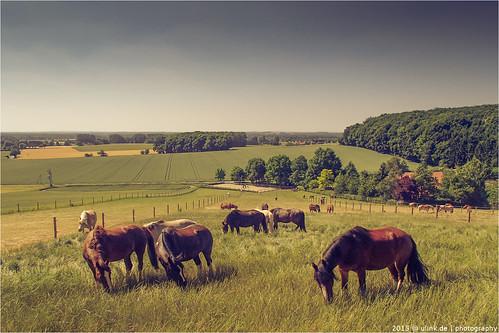 _münster_&_pferdeland
