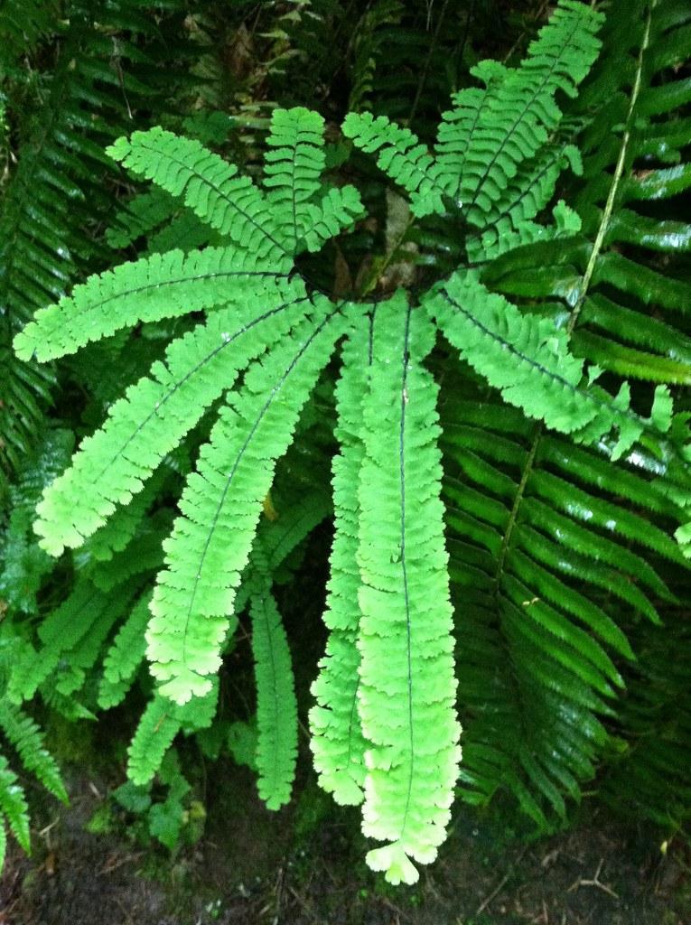 c fern report Study 15 c-fern lab 1 flashcards from sarah w on studyblue.
