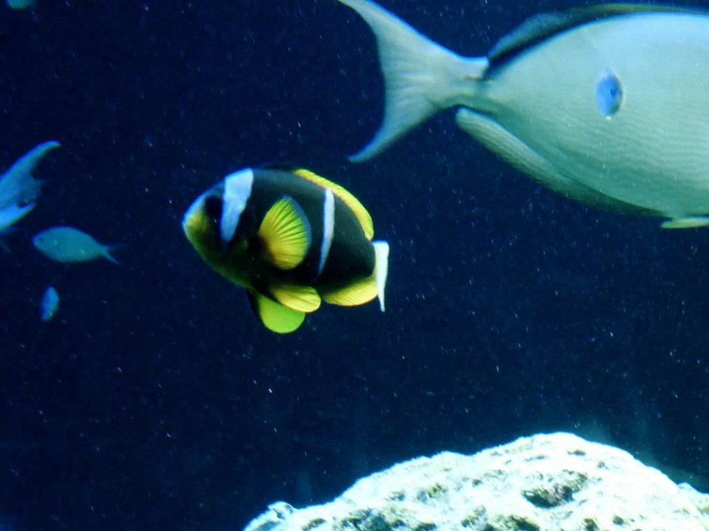 Virginia Aquarium Marine Science Center Arielle Mark