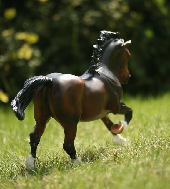 EA Fantastic Mr Copperfox - Welsh Cob - stallion - OF - EG sfgdgfd