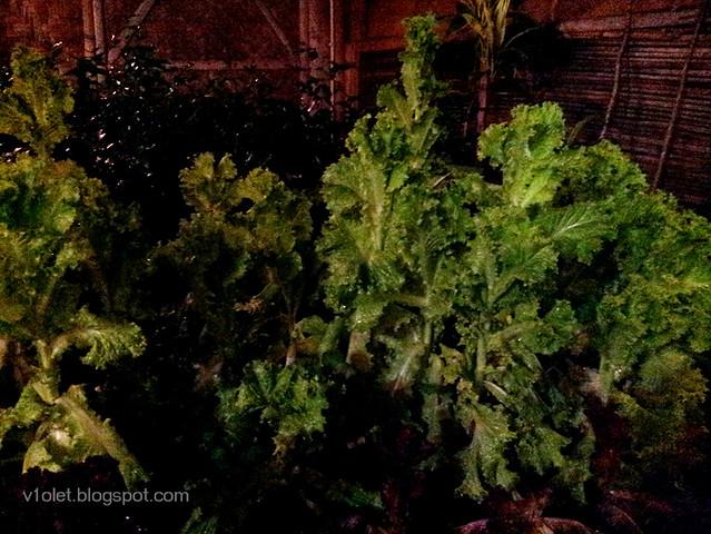 20150218_191852 sayur organik1rw