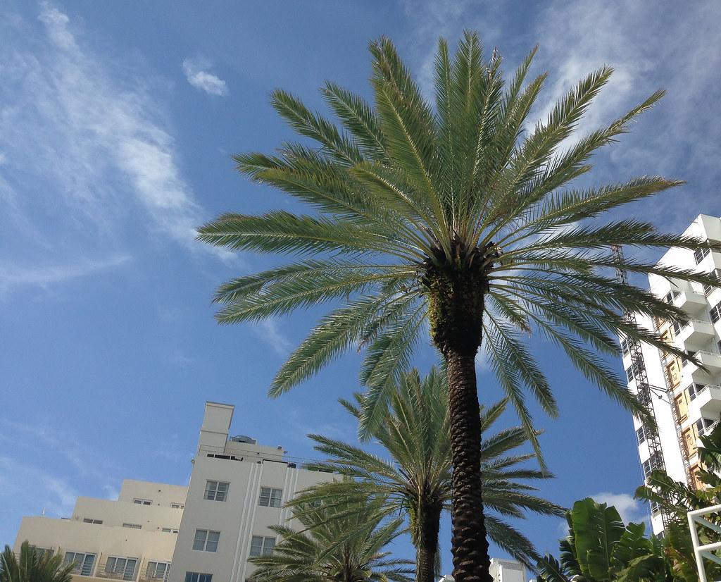 South Beach Hotel Specials