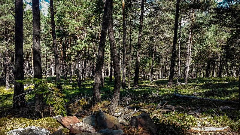 Restos de una carbonera en el bosque