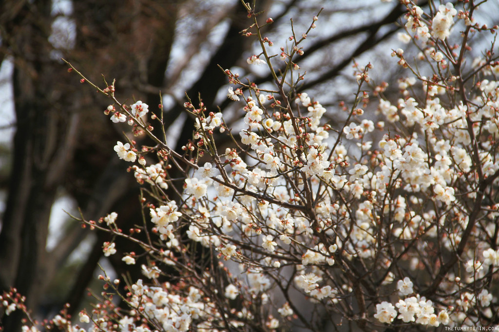 32686677524 eb5cfda84b b - Seoul-ful Spring 2016: Greeting the first blooms at Changdeokgung Palace