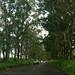 Road to Poipu