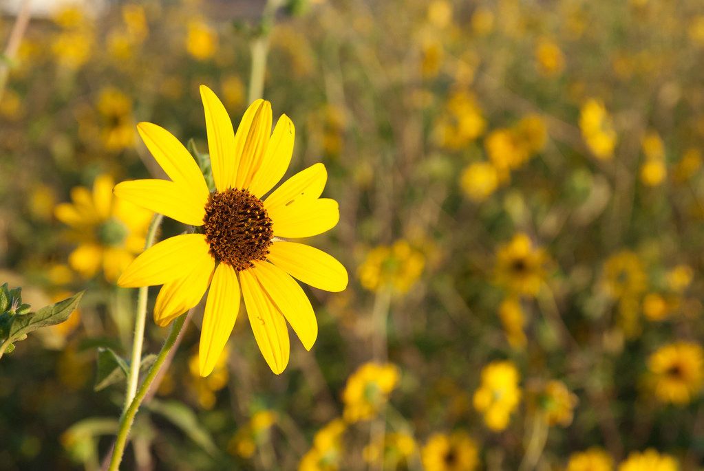 Flower I Went Crazy In A Small Field Of Flowers In