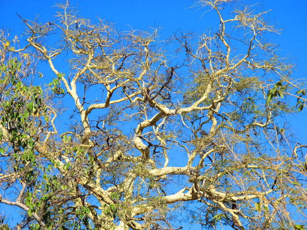 Fever Tree Green Room Bankside
