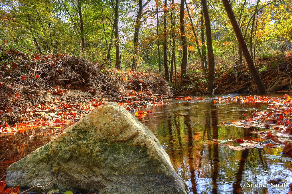 Fall Colors On Red Run Stream Vally Owings Mills Marylan