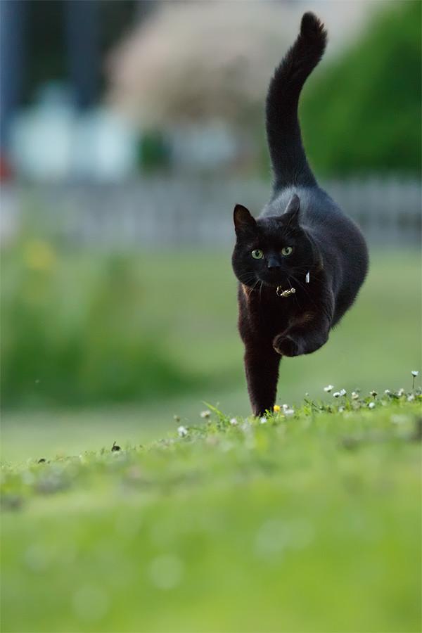 Серая кошка идет на тебя к чему это