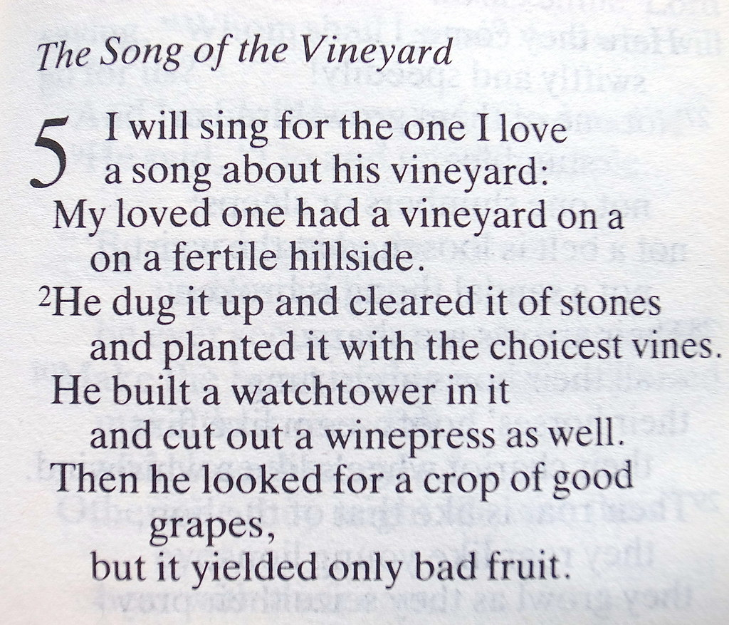 Exploring isaiahs message in the parable of the vineyard