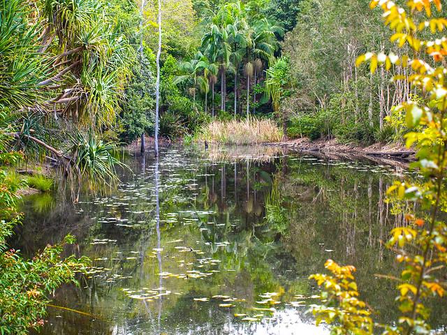 Australian Plant Communities - Brisbane Botanic Gardens Mt Coot-tha