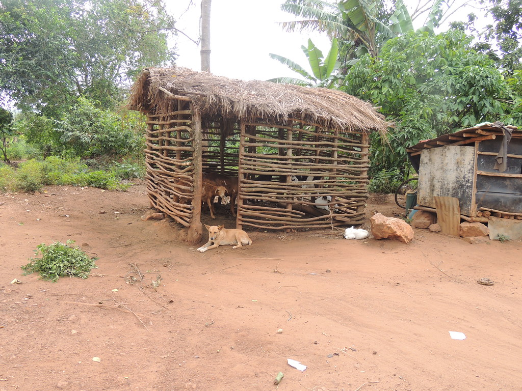 Goat shed in Mukono District, Uganda | A wooden shed in ...