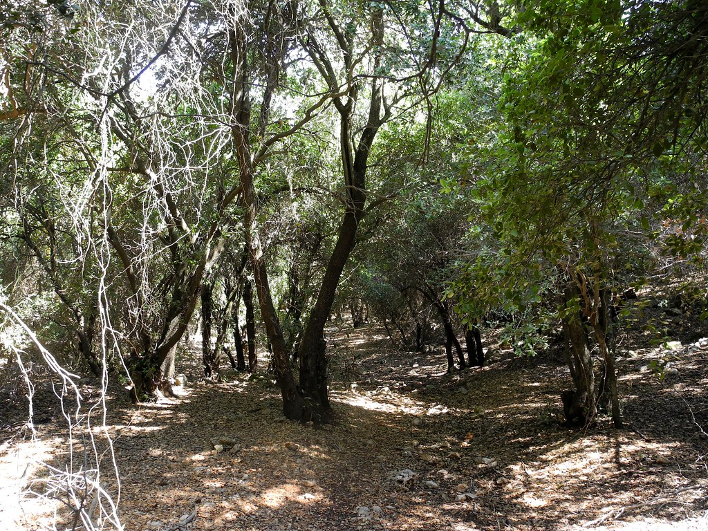 A Walk Through the Forest.