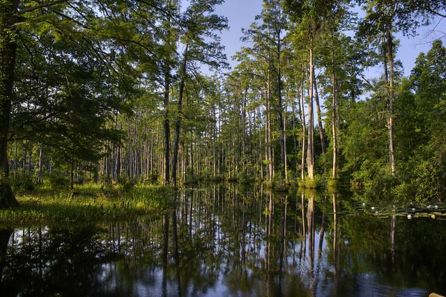 Cypress Gardens Moncks Corner South Carolina Flickr Photo Sharing