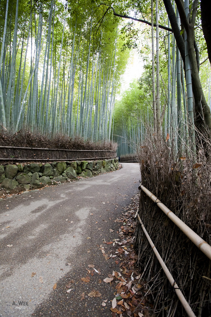 Pathway in the Bamboo Grove