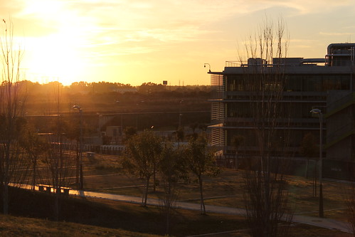 2014.02.02.101 - SEVILLA - Campus Palmas Altas