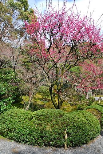 Jard n exterior del templo ryoanji jap n entre amigos for Amigos del jardin