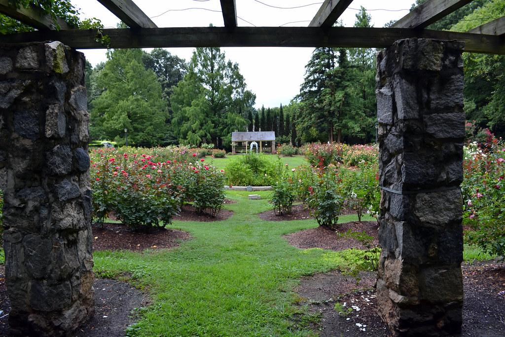 Raleigh Little Theatre Rose Garden Suzie Tremmel Flickr