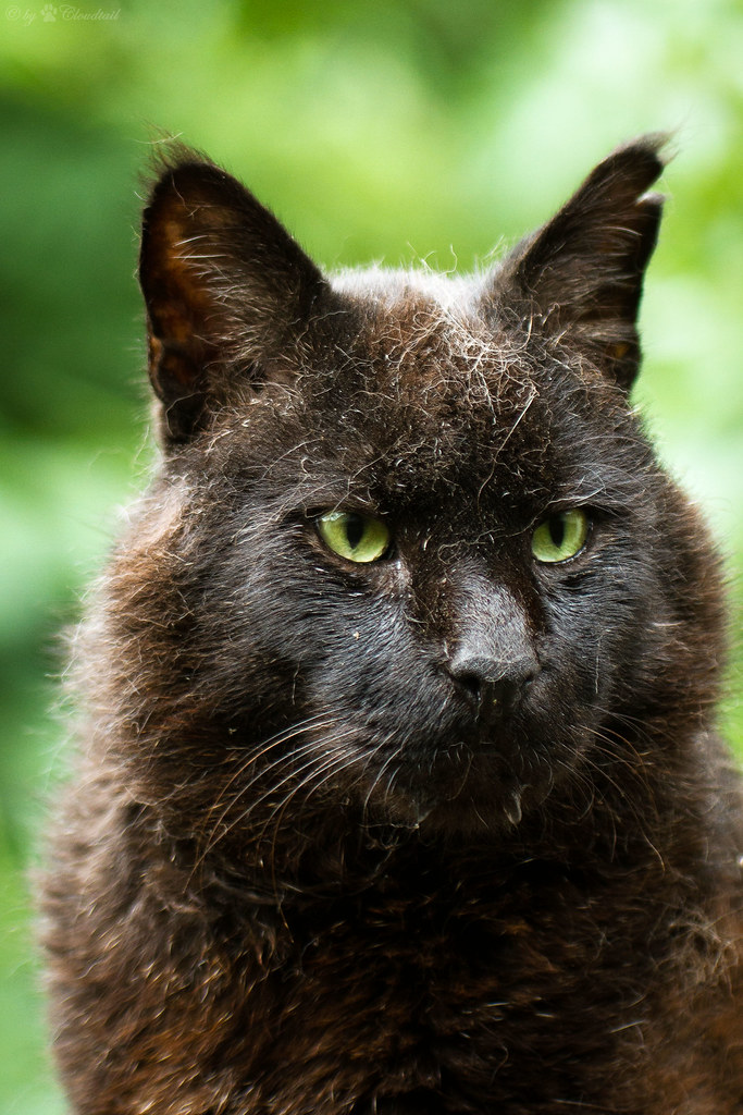 black jungle cat   A pic from a swamp lynx, I've ssen at ...
