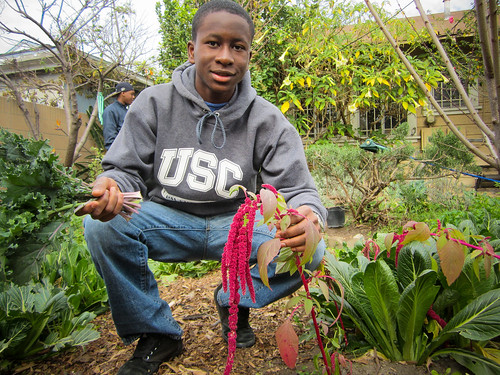 Temiloluwa Salako, a Cultivar with RootDownLA, showing off a grain plant called amaranth that is growing in one of the program's community gardens