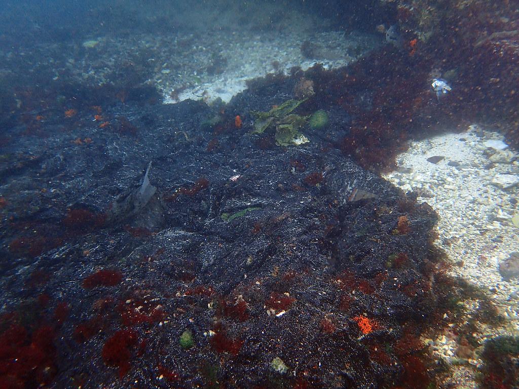 20170312 環保署綠島油汙醉心處理