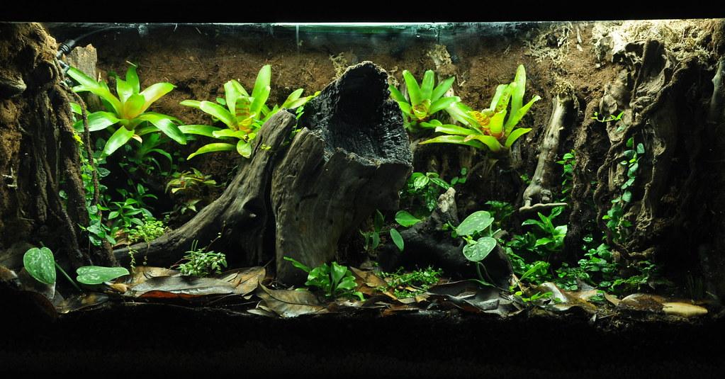 Dart Frog Vivarium | John Williams | Flickr 10 Gallon Dart Frog Vivarium