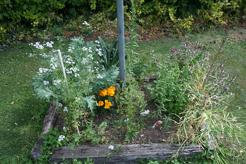 Garden Bed, Clothesline - 2014-02-01