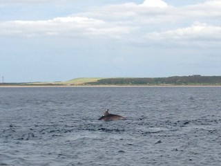 dolphin spotting on the black isle in scotland