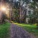 Afternoon sun - Olinda Falls