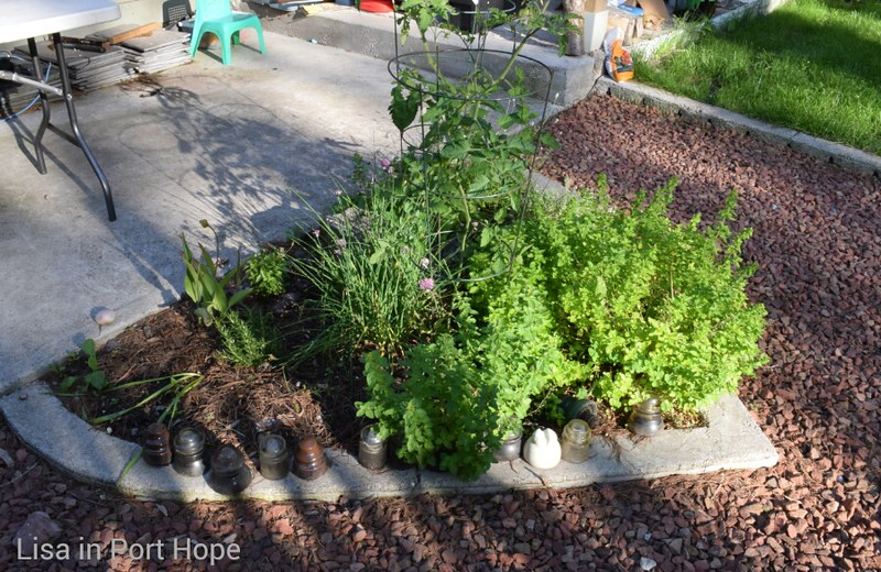 Herb garden. Cilantro, oregano, basil, lavender, thyme, rosemary, chives, and even tomatoes.