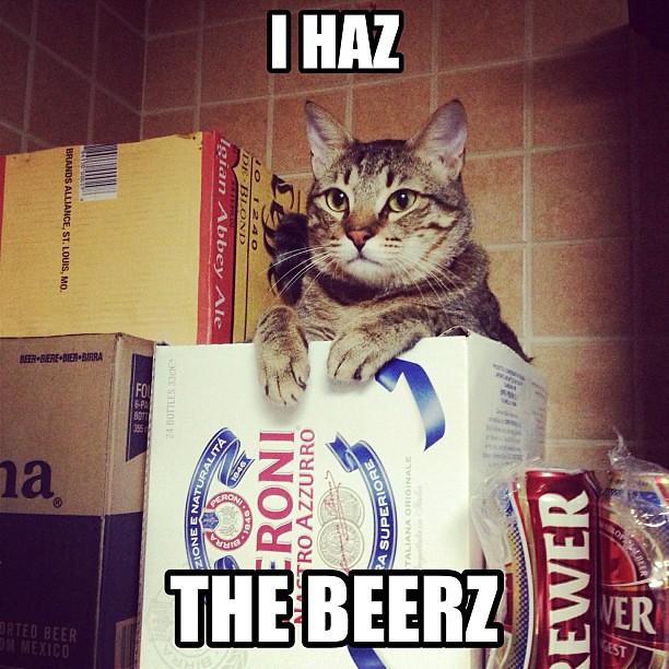 Tabby Cat Meme